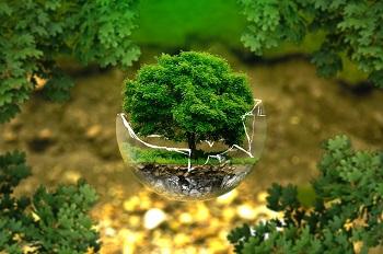 L'écologie et naturopathie