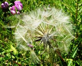 Fleur Ange