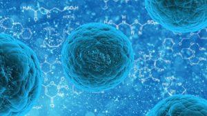 Cellules immunitaires